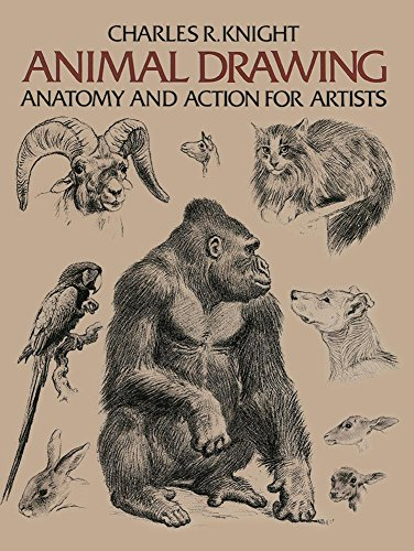 9780486204260: Animal Drawing (Dover Anatomy for Artists)