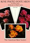 9780486267104: Rose Photo Postcards in Full Color/24 Ready-To-Mail Cards