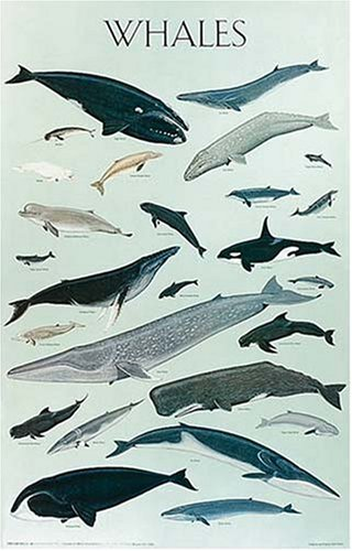 9780486390116: Whales/Poster
