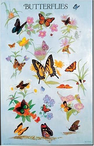 9780486390215: Butterflies Poster (Posters)