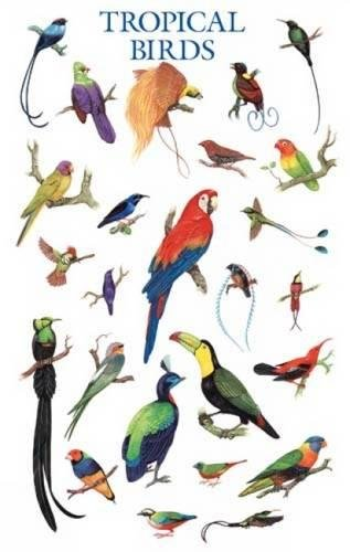 9780486390277: Tropical Birds Poster (Dover Posters)