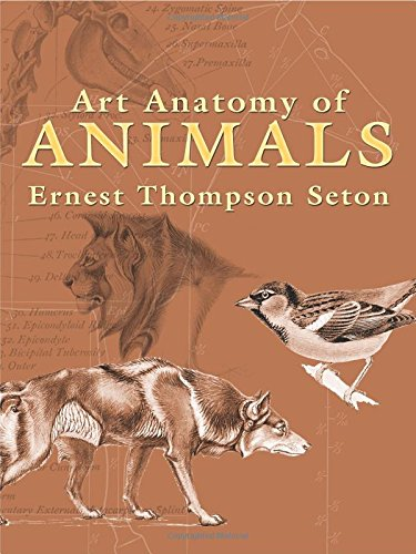 9780486447476: Art Anatomy of Animals