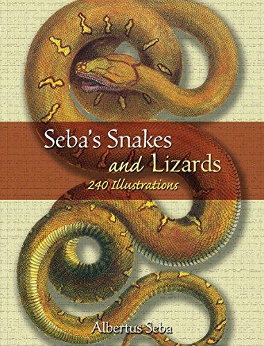 Seba's Snakes and Lizards: 240 Illustrations (Dover: Seba, Albertus