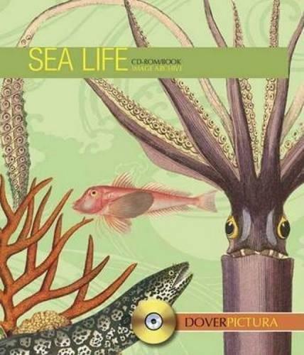 9780486996684: Sea Life