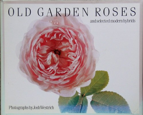 Old Garden Roses: And Selected Modern Hybrids