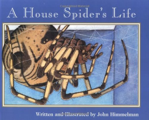 9780516265360: A House Spider's Life (Nature Upclose (Paperback))
