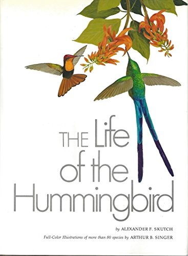 The Life of The Hummingbird