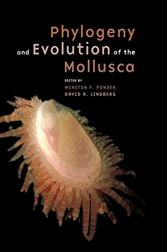 9780520250925: Phylogeny and Evolution of the Mollusca