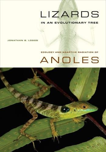 LIZARDS IN AN EVOLUTIONARY TREE: ECOLOGY AND: LOSOS, Jonathan B.,