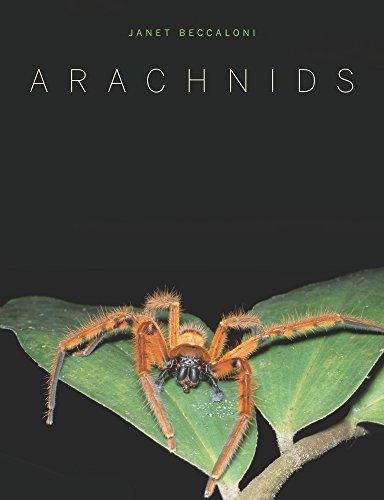 9780520261402: Arachnids