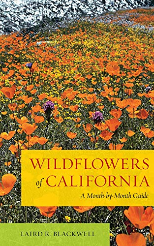 9780520272057: Wildflowers of California: A Month-by-Month Guide