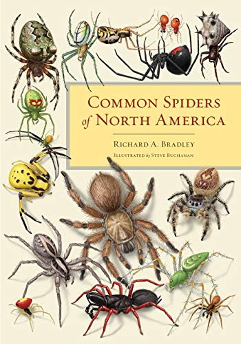 9780520274884: Common Spiders of North America