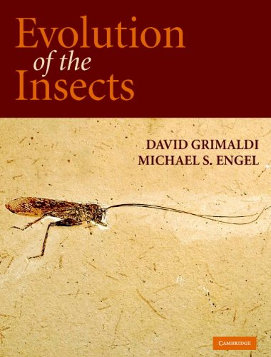 9780521821490: Evolution of the Insects Hardback (Cambridge Evolution Series)