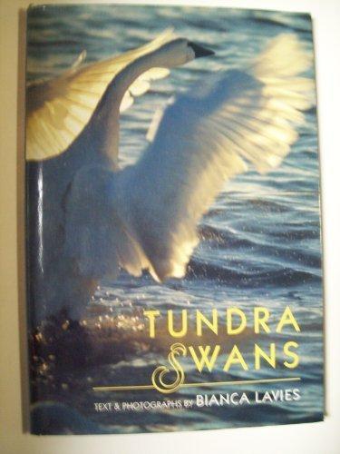 Tundra Swans: Lavies, Bianca