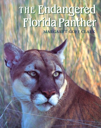 The Endangered Florida Panther
