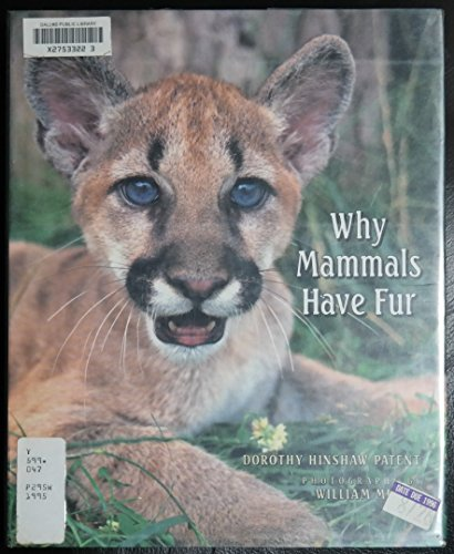 Why Mammals Have Fur
