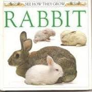9780525673569: Rabbit: 9 (See How They Grow Series)