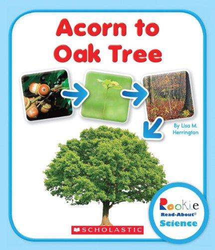 Acorn to Oak Tree (Rookie Read-About Science): Lisa M. Herrington