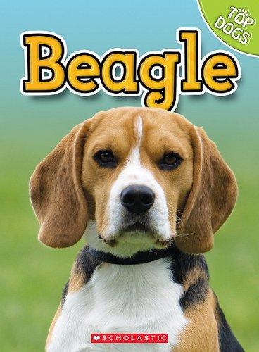 9780531249314: Beagle (Top Dogs (Scholastic))
