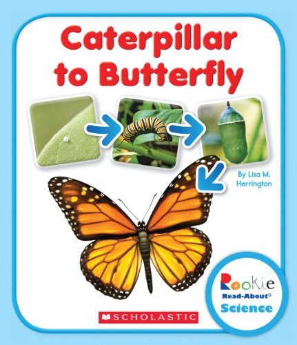 9780531249765: Caterpillar to Butterfly (Rookie Read-About Science)