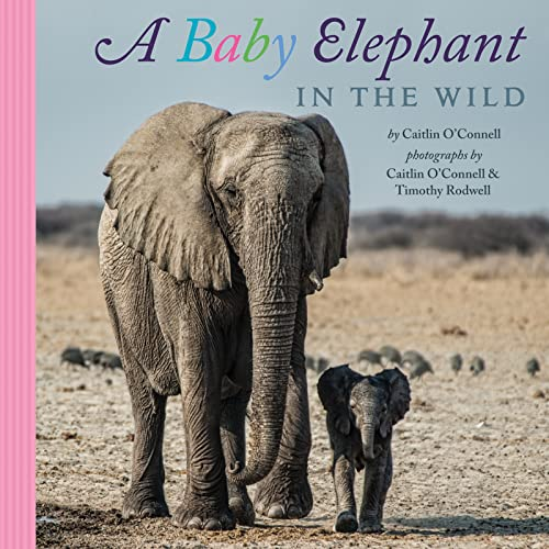 9780544149441: A Baby Elephant in the Wild