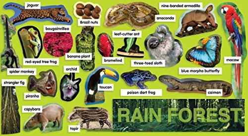9780545177511: Rainforest Plants & Animals Mini Bulletin Board