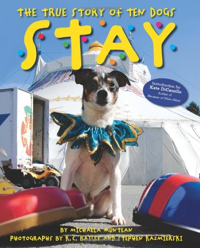 9780545234979: Stay: The True Story of Ten Dogs