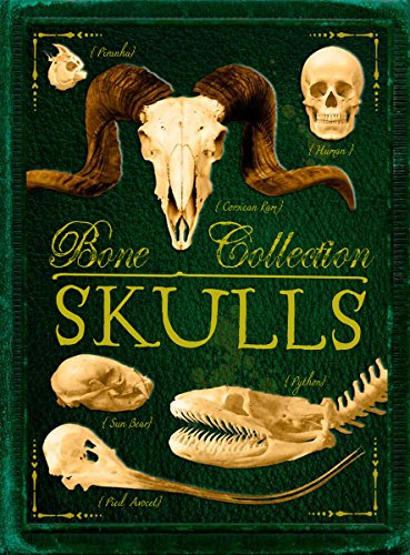 9780545724579: Bone Collection: Skulls