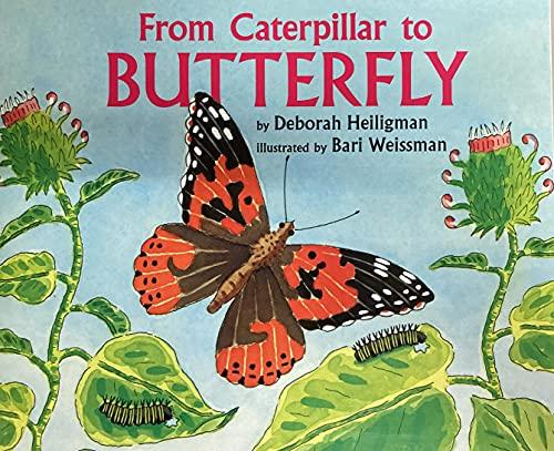 9780547884820: Journeys: Little Big Book Grade K From Caterpillar to Butterfly