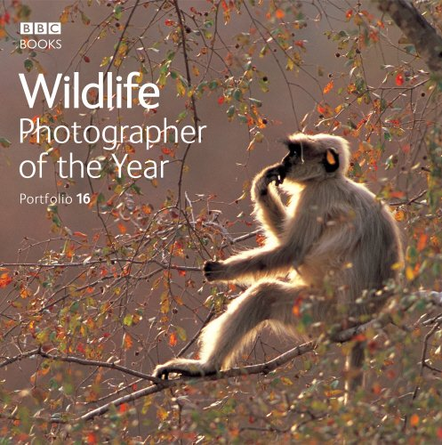 9780563493846: Wildlife Photographer of the Year Portfolio 16 (Photography)
