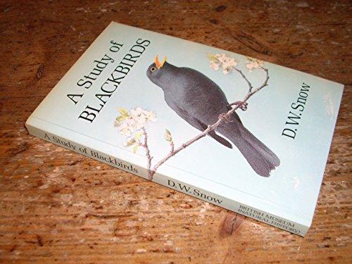 9780565010218: Study of Blackbirds