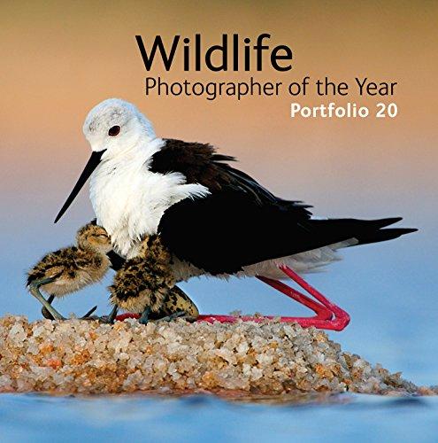Wildlife Photographer of the Year: Portfolio 20 - Rosamund Kidman Cox
