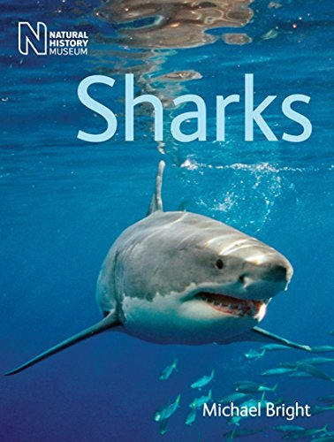 9780565092894: Sharks