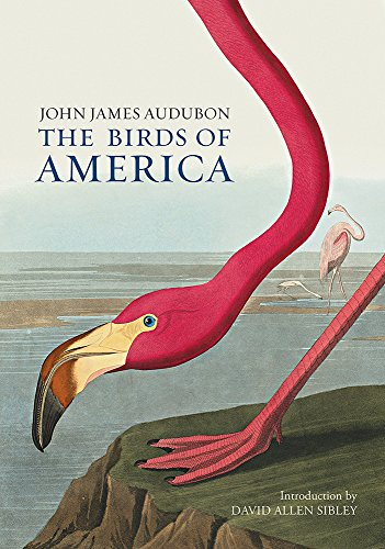 Audubon Ariel Press FOLIO American Flamingo Birds of America