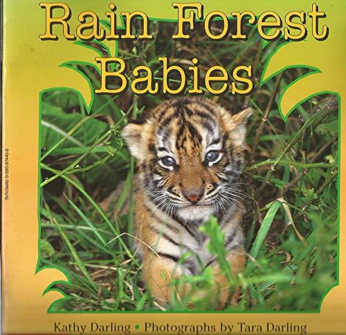 9780590974400: Rain Forest Babies