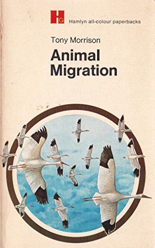 Animal Migration: Morrison Tony