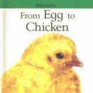From Egg to Chicken (Lifecycles): Legg, Gerald