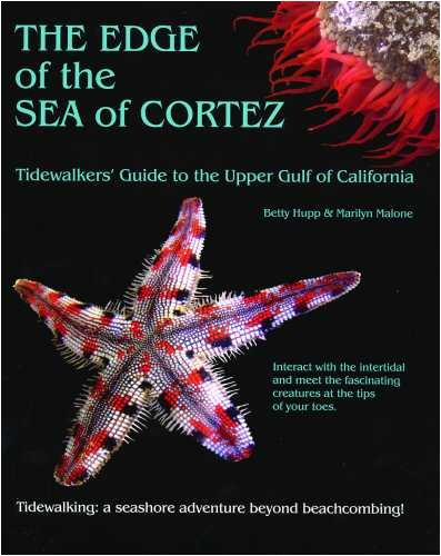 9780615248288: The Edge of the Sea of Cortez: Tidewalker's Guide to the Upper Gulf of California