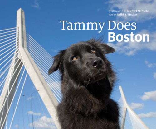 Tammy Does Boston Format: Hardcover: Malyszko, Michael