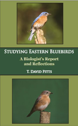9780615411330: Studying Eastern Bluebirds: A Biologist's Report and Reflections