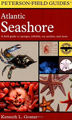 9780618002092: A Field Guide to the Atlantic Seashore: From the Bay of Fundy to Cape Hatteras (Peterson Field Guides)