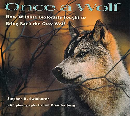 9780618111206: Once A Wolf: How Wildlife Biologists Fought to Bring Back the Gray Wolf