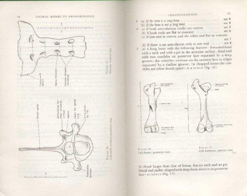 9780632048502: Animal Bones in Archaeology