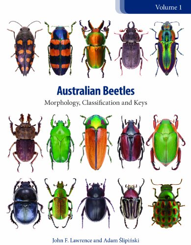 9780643097285: 1: Australian Beetles: Morphology, Classification and Keys (Australian Beetles Series)