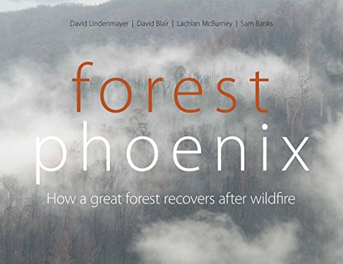 Forest Phoenix: How a Great Forest Recovers After Wildfire (0643100342) by David Lindenmayer; David Blair; Lachlan McBurney; Sam Banks