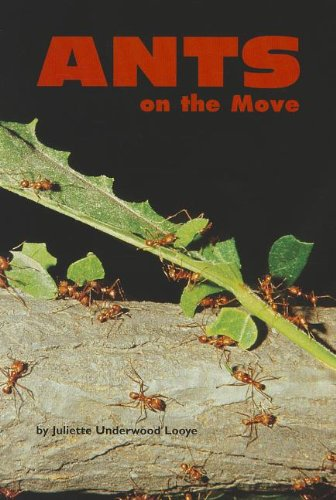 Ants on the Move: Juliette Underwood Looye