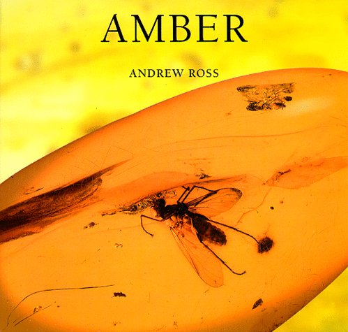 9780674017290: Amber