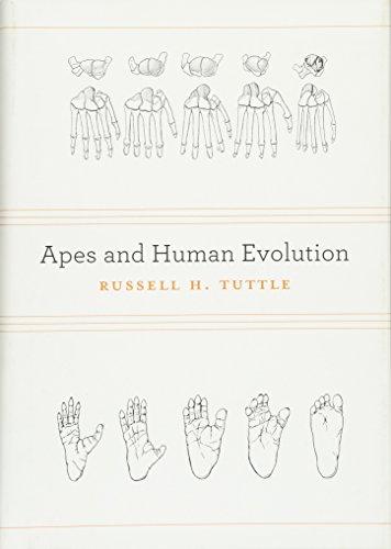 9780674073166: Apes and Human Evolution