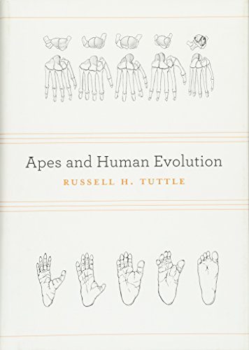Apes and Human Evolution: Tuttle, Russell H.