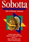 9780683078374: Atlas of Human Anatomy: Head, Neck, Upper Limb v. 1
